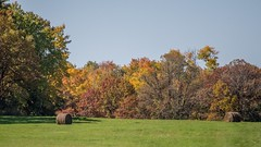 fall colors (selo0901) Tags: fall colors autumn minnesota little falls morrison county hay field bales