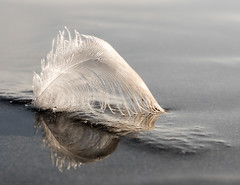 balancing act (marianna_a.) Tags: p1090572 feather beach water drops macro lightness light meniscus reflection mariannaarmata