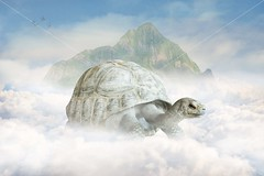 Tortoise ride (lewie4721) Tags: digital backdrop background fantasy magical turtle tortoise clouds sky mountain hills animal composite art creative foggy haze blue white