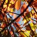 Leaf Matrix