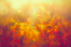A tangled mess (Ans van de Sluis) Tags: ansvandesluis bokeh bokehlicious botanic botanical brakkenstein flora floral flower macro march nature sunset tangle mess