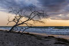 Ein Baum am Meer (tan.ja1212) Tags: baum tree himmel sky sonnenuntergang sunset strand beach sand meer sea wolken clouds ostsee balticsea