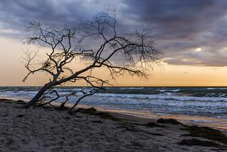 Ein Baum am Meer