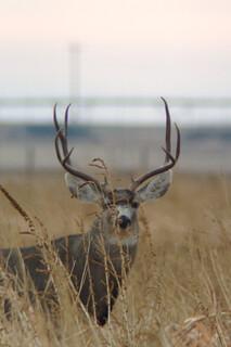 Texas Free Range Hunt – Palo Dura Canyon 24