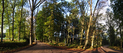 Forest crossing (Tom Hazen) Tags: forest crossing road nature woods tree trees blue sky fall leaves netherlands backyard home shadow sun dirt panorama widescreen wood grass north brabant belgium tilburg turnhout poppel alphen riel goirle flora fauna naturaleze green nikon landscape