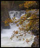 Autumn waterfall at Betws (rhianwhit) Tags: river llugwy autumn full flowing leaves wales spray water rocks flood