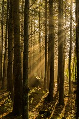 River Almond Forest (Chris_Hoskins) Tags: autumn wwwexpressionsofscotlandcom scottishlandscapephotography scotland edinburgh scottishlandscape sunbeams sunrays longexposure landscape centralscotland