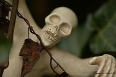 Halloween (Agnes Van Parijs) Tags: griezel fear angst macro macromondays halloween skelet griezelen allhallowseve trickortreat