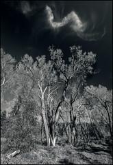 Cloud Wisps (Timothy Earl) Tags: whitemountains arizona bw
