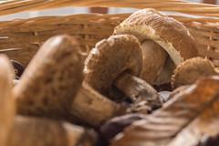 Panier d'automne 1 (take a look through my eyes ;)) Tags: panier basket automne autumn champignons mushrooms nature forêt forest chestnut châtaignes cèpe bolet coulemelle leaf feuille france