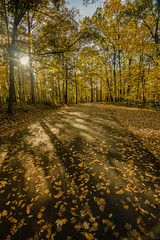 Fall Sunrise (Bernie Kasper (4 million views)) Tags: art berniekasper cliftyfallsstatepark cliftyfalls d600 family fall hiking indiana jeffersoncounty landscape light leaf leaves love madisonindiana madisonindianacliftyfallsstatepark nature nikon naturephotography new outdoors outdoor old outside photography road travel tree trees shadow shadows trail sunrise sun morning