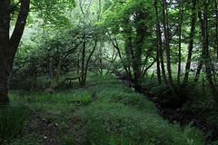 IMG_3143 (avsfan1321) Tags: connemaranationalpark connemara nationalpark ireland countygalway green lush landscape plants