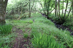 IMG_3141 (avsfan1321) Tags: connemaranationalpark connemara nationalpark ireland countygalway green lush landscape plants