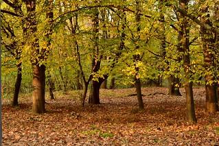 Autumn DSC_0599