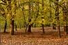 Autumn DSC_0599 (Me now0) Tags: есен софиябългарияевропа юженпарк никонд5300 следобед afternoon autumn nikond5300 micronikkor40mm europe park