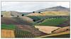 Cultures andalouse -  Andalusian cultures (diaph76) Tags: espagne spain andalousie extérieur paysage landscape champs fields arbres trees agriculture
