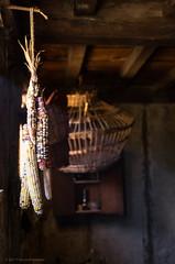 Hanging corn (alohadave) Tags: 17thcenturyenglishvillage autumn clearsky fall massachusetts northamerica pentaxk5 places plimothplantation plymouth plymouthcounty season sigma1750mmf28exdchsm sky unitedstates
