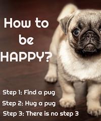 How to be happy (ShaluSharmaBihar) Tags: pug pugs dog dogs pugdog howtobehappy happy funny