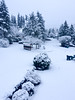 Snow (Sujal Parikh) Tags: snowday redmond washington unitedstates us february 2017 snow 47697605 122100578333333 snowed mean school closed trecherous driving conditions perfect sledding