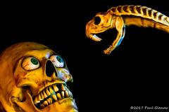 Face off (Glotzsee) Tags: glotzsee glotzseefloridaimages halloween halloween17 scary fright skull decorations props fun