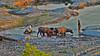 time for your bath.... (Jinky Dabon) Tags: fujifilmfinepixhs35exr rurallife rural farmer farmers animal waterbuffalo waterbuffaloes lahar mountpinatubo mtpinatubo craterlake volcano volcanoeruption laharformation trek trekking