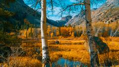 Aspens in Color (Yaecker Photography) Tags: autumn easternsierra landscape lundycanyon lundylake sierra aspens