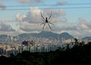 Spider's View of Hong Kong (cowyeow) Tags: golden orb weaverspider nephilapilipes orbspider weaver nephila pilipes goldrenorb taimoshan goldenorbspider goldenorb spider spiders bug web big hongkong china asian chinese asia nature webbing creepy wildlife composition city urban cityscape landscape cloud clouds silhouette