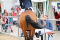 _MG_6025 (dreiwn) Tags: ridingarena reitturnier reiten reitplatz reitverein reitsport ridingclub equestrian showjumping springreiten horse horseback horseriding horseshow pferdesport pferd pony pferde tamronsp70200f28divcusd