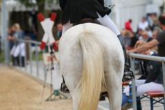 _MG_6170 (dreiwn) Tags: ridingarena reitturnier reiten reitplatz reitverein reitsport ridingclub equestrian showjumping springreiten horse horseback horseriding horseshow pferdesport pferd pony pferde tamronsp70200f28divcusd