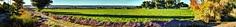South Valley Farm Fields (JoelDeluxe) Tags: southvalley farm fields alfalfa panorama landscape hdr joeldeluxe