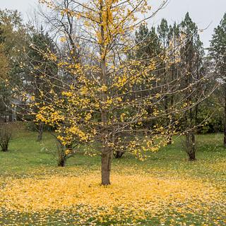 Fall has Fallen - Explore #384 - THANKS!