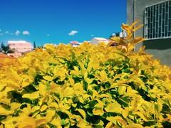 Thursday ☀ (Lemon Mousse!) Tags: thursday quinta sunny sunnythursday azul blue