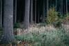Da lang (Lukas Litz Obb) Tags: forest landscape mixedforest naturephotography 32 6d ahleck anhausen canon dedeutschland eos6d europa herbst landschaft meinborn mischwald naturfotografie neuwied rheinlandpfalz umwelt wald waldlichtung autumn environment kalt nr nwd season vsco ef2470mmf4