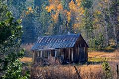 Well loved, photographed often, abandoned cabin. Smoke from fires made the haze (Schnauzergal) Tags: fallcolors fallfoliage naturebynikon nature trees california nikon landscape