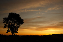 Strathmore Valley silhouette. (alan.irons) Tags: silhouette sunrise sky tree dawn daybreak strathmore sidlawhills angus glamis landscape orange eos1dxmk2 fullframe ef2470f28llusm canon scotland scottish scenery halcyon calm autumn ecosse idyllic serene fence mist valley tayside dundee morning