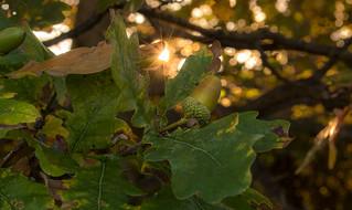 Autumnal nostalgia