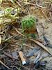 A simple encounter between man and nature (fotografiedisara) Tags: cactus prato nature cigarettes sigaretta uomo