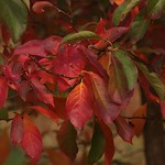 Hot Reds thumbnail