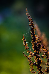 backlit (JayPiDee) Tags: bigma bokeh dof gegenlicht herbst pflanzen sigmadg50500mm4563apohsm autumn backlight backlit contrejourshot fall piante plants hamburg deutschland