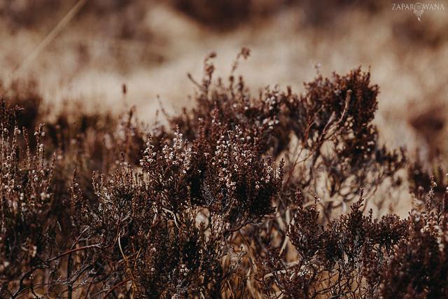 075 - Szkocja - Loch Lomond i okolice - ZAPAROWANA_