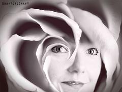 Rose (Brigitte Graf) Tags: rose double exposure multiple monochrome manipulation art flower portrait doppelbelichtung mehrfachbelichtung face gesicht blume blur photoshop composition digital artwork