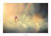La fée des bois (Naska Photographie) Tags: naska photographie photo photographe paysage proxy proxyphoto magie magic féé féerique féerie color couleur bokeh flare flower onirique onirisme ambiance univers minimaliste minimalisme champignon mushroom light sun rayon art artistique artist