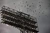 Fenway Flock (BlueShift 12) Tags: bird fenway light clouds dramatic flight canoneos5dmarkii rawtherapee gimp