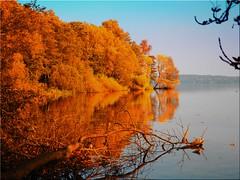 Autumn at the lake Plön (Ostseetroll) Tags: deu deutschland geo:lat=5414574697 geo:lon=1040668966 geotagged plön prinzeninsel schleswigholstein plönersee lakeplön herbst herbstfarben autumn autumncolours spiegelungen reflections bäume trees wasser water