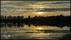 Etang des Grèves1 (touflou) Tags: étang étangdesgrèves belleville bellevillesurloire cher coucherdesoleil crépuscule réflection reflets