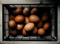 (ashandfern) Tags: eggs farm farming freerange fresheggs alaska