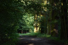 summer moods (JoannaRB2009) Tags: summer mood path road alley avenue oak oaks old tree trees forest woods nature walk green dark miliczponds stawymilickie dolinabaryczy riverbaryczvalley dolnyśląsk lowersilesia polska poland
