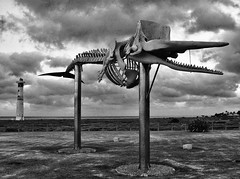 Bite Me (tcees) Tags: skeletonofspermwhale playadelmatorral avdelsaladar morrojable canaryislands canaries fuerteventura morrojablelighthouse park skeleton spermwhale mono blackandwhite bw teeth bones fence sky clouds grass x100 fujifilm