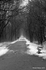 Lonely Man (rcss2800) Tags: railline railroad walkingtrail people blackandwhite tree road park monochrome landscape