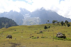 Sonamarg (Beautiful Creation) Tags: srinagar ladakh leh india kagil boat house pangong lake pass